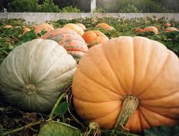 Worlds Heaviest Pumpkin Pie by 10 Shocking Halloween World Records