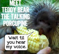 Porcupine Eating Pumpkin And Talking by Rants From Mommyland January 2013
