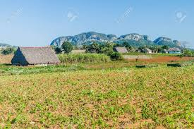Landscape Of Vinales Valley With Tobacco Fields And Drying Houses Cuba Stock Photo
