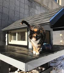 cats on deck swat cat seeks refuge in a station so the cops made a