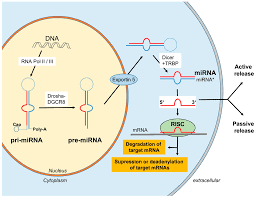 Sofa Sepsis Pdf 2016 by Ijms Free Full Text Circulating Micrornas As Biomarkers For