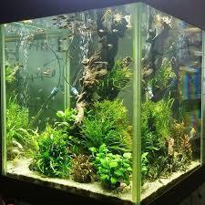 Star Wars Themed Aquarium Safe Decorations by 264 Best Aquariums Images On Pinterest Aquarium Ideas