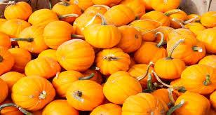 Pumpkin Patch Chesapeake Va by Calvert County Pumpkin Patches Family Traditions Your Calvert