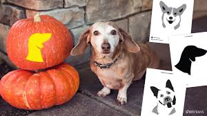 Naughty Pumpkin Carvings Stencils by Dog Carving Pumpkin Ideas Halloween Radio Site