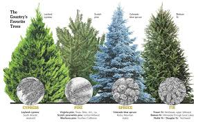 Types Of Christmas Trees To Plant by Christmas Christmas Tree Species Southern Il List Woody Acres