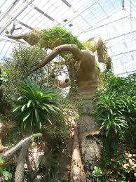 File Cleveland Botanical Garden baobab Wikimedia mons