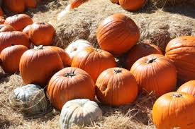 Pumpkin Patch Roseville Ca by Much To See In Autumn At Apple Hill Orchards Sacramento Press