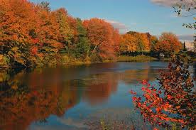 Bones Sinking Like Stones Traducida by 12 Best New England Images On Pinterest In The Fall Autumn Fall