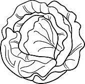 Lettuce Clipart Black And White