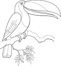 Coloriage Toucan Nikolaisabev Info