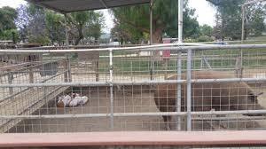 Pumpkin Patch Animal Farm In Moorpark California by L A Adventures Underwood Family Farms Bloomington Bucket List