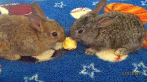Can Rabbits Eat Pumpkin Seeds by Baby Bunnies Eating Bananas Youtube
