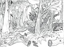 Jungle Animal Coloring Pages Free Printable Hard Forest Animals Color For Toddlers