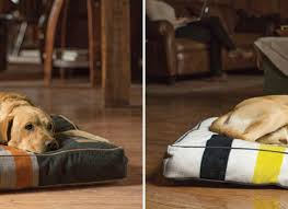 tips chew proof dog bed orvis chew proof dog bed dog beds dog beds