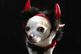 Tompkins Square Halloween Dog Parade by 41 Hilarious Pictures Of Howl O Ween Dogs Today Com