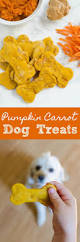 Feeding Dog Pumpkin Constipation by Homemade Pumpkin Carrot Dog Treats Recipe Pup Carrots And
