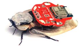 Cyborg Cockroaches, DARPA, And Girls In STEM – Snip, Burn, Solder Blog Heart And Brain Spikershield Bundle Live Cyborg Cockroach Launch Kickstarter Business Insider Backyard Brains Boroach 28 Images How To Turn A Pressreader Guru Magazine 140203 Remote Control For Brains Update Boroachtheres Not An App For That Peta Bluetooth Controlled Boroach By Backyard Brains Youtube Jeff Wilson A Visit From Backyard Right Royal Rumpus Over Remotecontrol The Register Sparks Ethics Debate Science Aaas