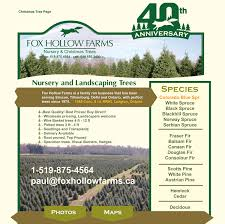 Christmas Tree Seedlings Wholesale by Fox Hollow Farms Landscaping Trees And Christmas Trees