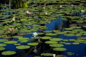 February 20 – 25 – Naples Botanical Gardens