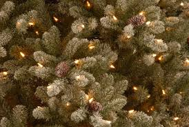 Martha Stewart Pre Lit Christmas Trees Kmart by National Tree Co 7 5 U0027 Snowy Concolor Fir Artificial Christmas