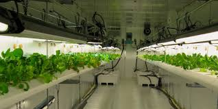 100 Shipping Containers For Sale Atlanta An Hydroponic Farm Flourishes GAC