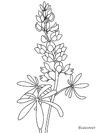 High Resolution Coloring Bluebonnet Flower Page New At Printable Flowers Pages Coloringpagebook