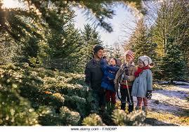 Eustis Christmas Tree Farm christmas tree farm family stock photos u0026 christmas tree farm