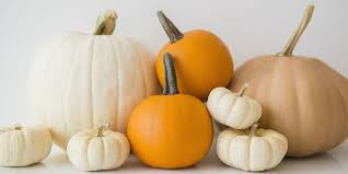Types Of Pumpkins For Baking by 15 Pumpkin Fun Facts Nutrition And Weird Information About Pumpkins