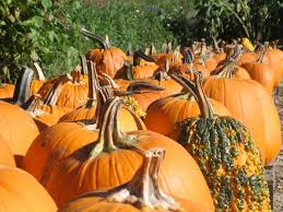Pumpkin Patch Durham North Carolina by 8 Best Pumpkin Patches In New Hampshire To Visit In 2016