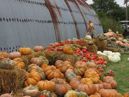 Pumpkin Patch Edmond Oklahoma by 42 Best Specialty Crops U0026 Products Oklahoma Agritourism Images