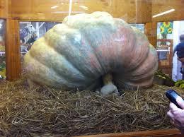 Largest Pumpkin Ever by Largest Pumpkin Ever Grown Volvoab