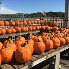 Pumpkin Picking Places In South Jersey by 8 Best Pumpkin Patches Near Philadelphia In 2017
