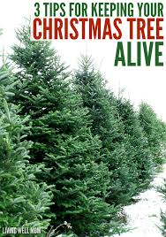 Sugar Or Aspirin For Christmas Tree by How To Keep Your Christmas Tree Alive 3 Simple Tips