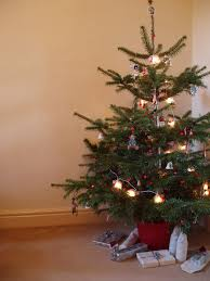 Slim Pre Lit Christmas Trees 7ft by Accessories Artificial Fir Christmas Tree 7ft Xmas Tree Frosted