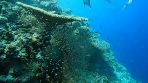 100 Dusit Thani Maldives Amazing House Reef YouTube