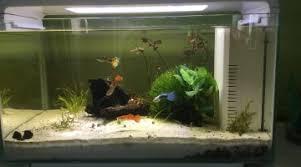 choix des habitants pour un aquarium de 240 litres