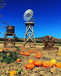 Tapia Brothers Pumpkin Patch by Pumpkin Patches Throughout California California Mom Bloggers