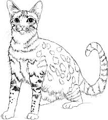4635 9 Realistic Cat Coloring Page