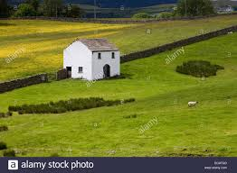 Field Barns And Meadow At Bowlees Teesdale England Stock Photo ... Field Barns Reeth Swdale Yorkshire Dales England Stock Photo Llamas Suffolk Smallholders Annual Show Stonham Beautiful 17th Century Barn Shipped Over From Asks 33 Harmondsworth English Heritage Kettlewell North Stone Barns Walls View Foxleigh Farm The Roost Ref Prrj In Kiford Near New Barn Wikipedia Uk Derbyshire Eyam Hall Courtyard Old New England Drive By Pinterest Daylesford The Cotswolds Shutters Sunflowers