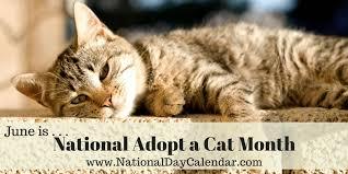 adopt a cat national adopt a cat month june national day calendar