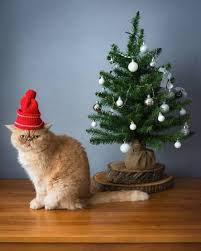 Persian Cat Wearing Red Christmas Hat Sitting Near Small Tree With Sad Face Stock Photo