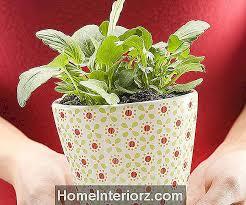 über den einsatz pflanzen im schlafzimmer für feng shui