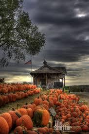 Flower Mound Pumpkin Patch Christmas Tree 344 best season autumn images on pinterest fall autumn fall