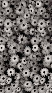 Urldircom Roses Vintage Backgrounds Tumblr Black And White Quotes U Full Hd Wallpaper Background X