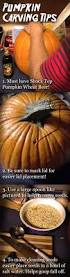 Shock Top Pumpkin Wheat Beer Nutrition by 17 Best Images About Halloween On Pinterest Halloween Costumes