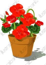 pot de géranium illustration fleur libre de droit sur illustrabank