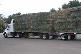 Calliope Wholesale Hay & Feeds - Want A Load Of Hay Filerefueling Hay Truckjpg Wikimedia Commons Highway 99 Reopens In South Sacramento After Hay Truck Fire Fox40 Semi Truck Load Of Kims County Line Did We Make A Small Stock Image Image Biological Agriculture 14280973 Boys Life Magazine Old With Photo Trucks Rusty 697938 Straw Trailers Mccauley Richs Cnection Peterbilt 379 At Truckin For Kids 2013 Youtube Hay Train West Coast Style V1 Truck Farming Simulator 2019 John Deere Frontier Implements Landscape Mowing Dowling Bermuda Celebrity Equine Llc
