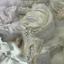 Ashfall Fossil Beds State Historical Park by Ashfall Unearthed Netnebraska Org