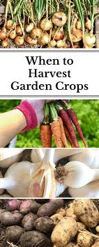 When To Harvest Your Fruit And Vegetable Crops | Carrots, Onions ... Texas Garden The Fervent Gardener How Many Potatoes Per Plant Having A Good Harvest Dec 2017 To Grow Your Own Backyard 17 Best Images About Big Green Egg On Pinterest Pork Grilled Red Party Tuned Up Want Organic In Just 35 Vegan Mashed Potatoes Triple Mash Mashed Pumpkin Cinnamon Bacon Sweet Gardening Seminole Pumpkins And Sweet From My Backyard Potato Salad Recipe Taste Of Home