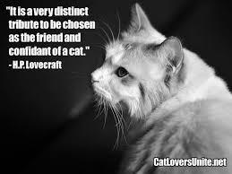 cat quotes lovecraft cat quote catloversunite net